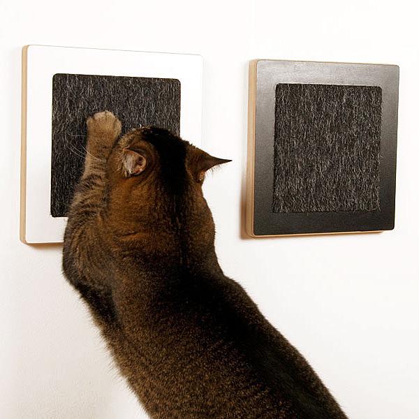 catscratchcat