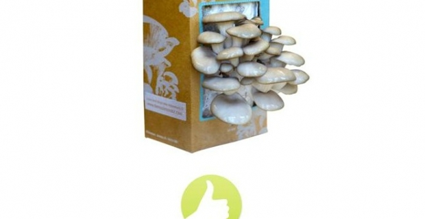 This Just In: Mushroom Kit