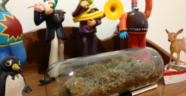 Gift Lab: Moss Terrarium