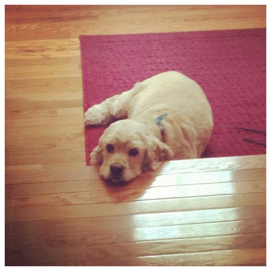 Sammy resting