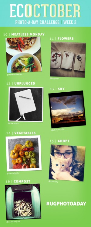 Instagram Photo A Day Challenge | UncommonGoods
