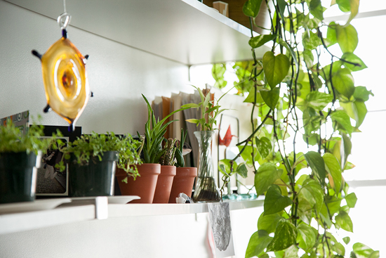 office plants | UncommonGoods