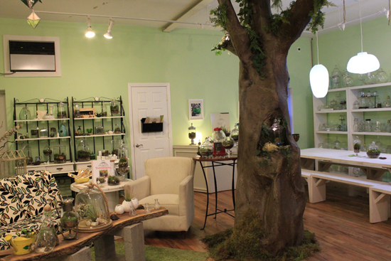 Every studio needs a tree | Twig Terrarium Studio Tour | UncommonGoods