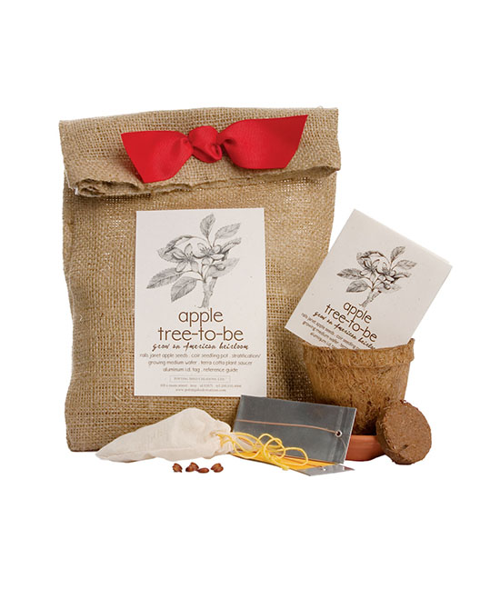 Apple Tree To Be Kit | UncommonGoods