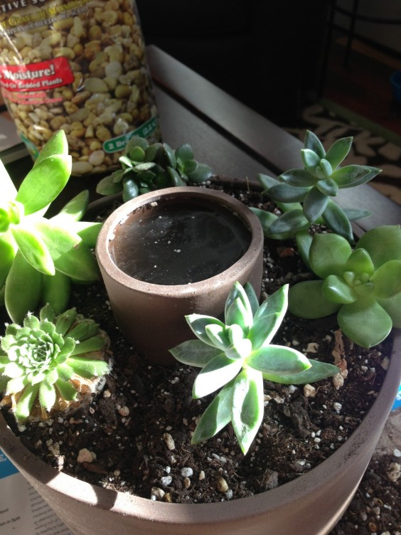 Self Watering Planter With Succulents | UncommonGoods