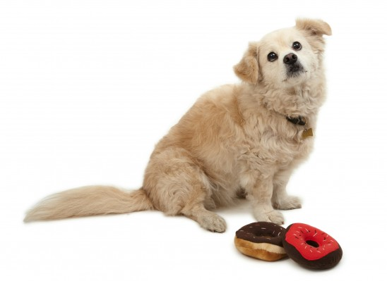 Squeaky Dog Donuts | UncommonGoods