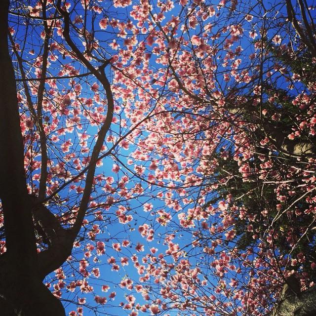 Instagram Challenge Winner | Spring Dreaming | #UGInstaFun