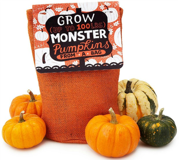 Pumpkin in a Bag Grow Kit | UncommonGoods