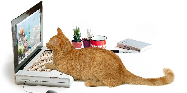 Laptop Cat Scratching Pad | UncommonGoods