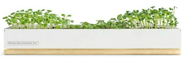 Micro-Greens Kits | UncommonGoods