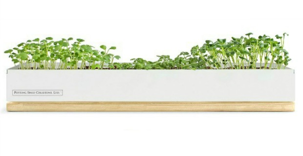Micro-Greens Kits - feature