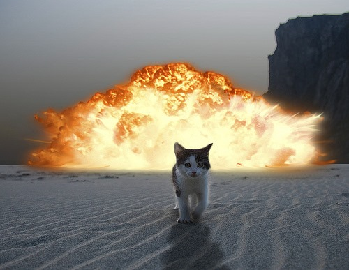 Cat coming out of flames