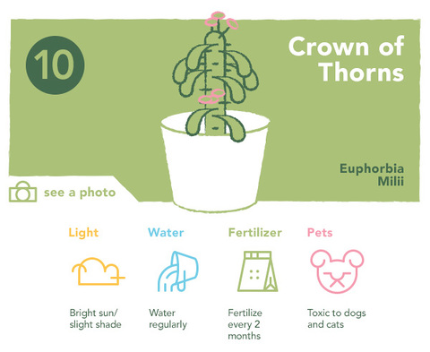Crown of Thorns | UncommonGoods