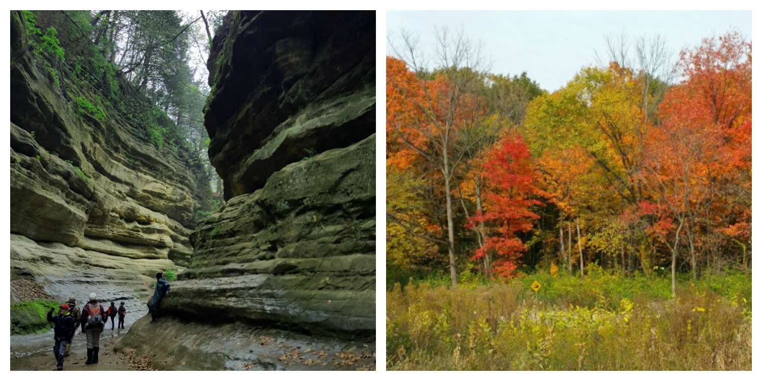 StarvedRock and trees collage