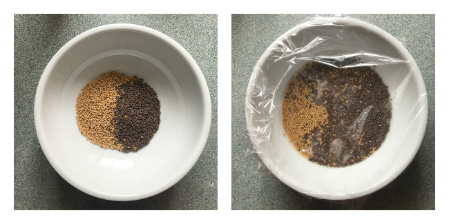 Seed and Beer Mixture