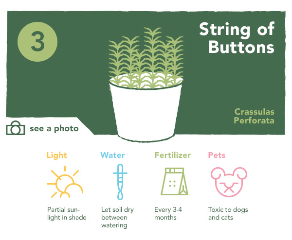 String of Buttons | UncommonGoods