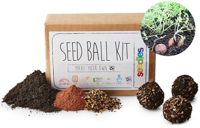 DIY Wildflower Seed Ball Kit | UncommonGoods