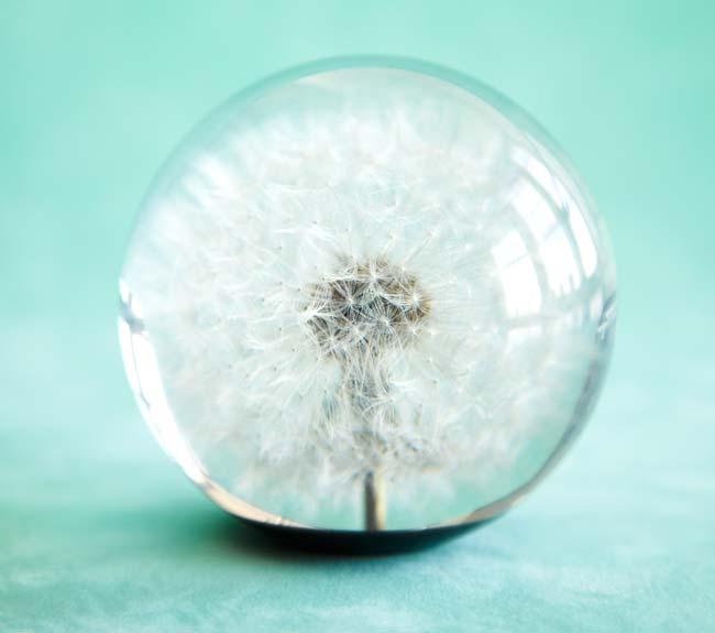 Dandelion Paperweight | UncommonGoods