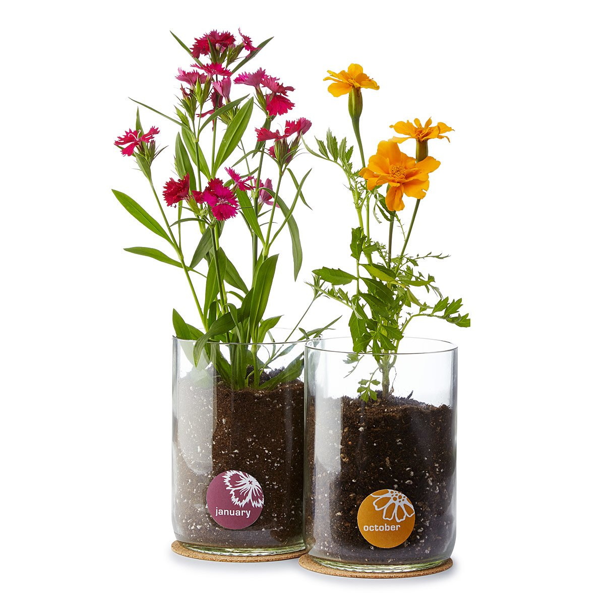 Our favorite gifts for everyone celebrating october birthdays the goods these diy flower kits come in flowers for all 12 months so grab the marigold version for your october birthday pal and theyll be growing in no time izmirmasajfo