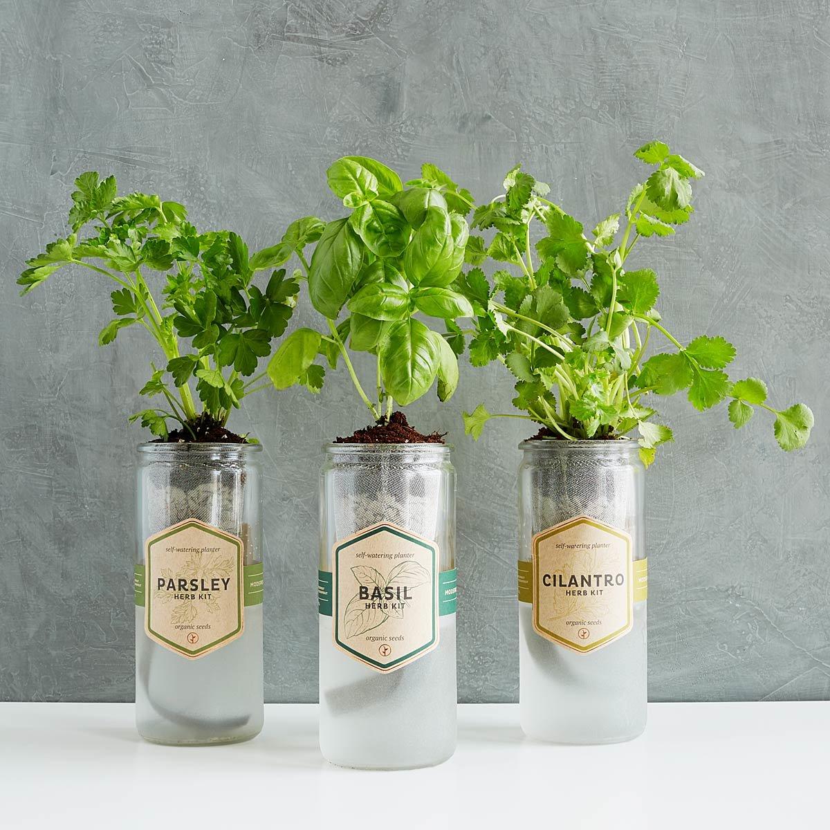 Kitchen Essentials Herb Planter | UncommonGoods