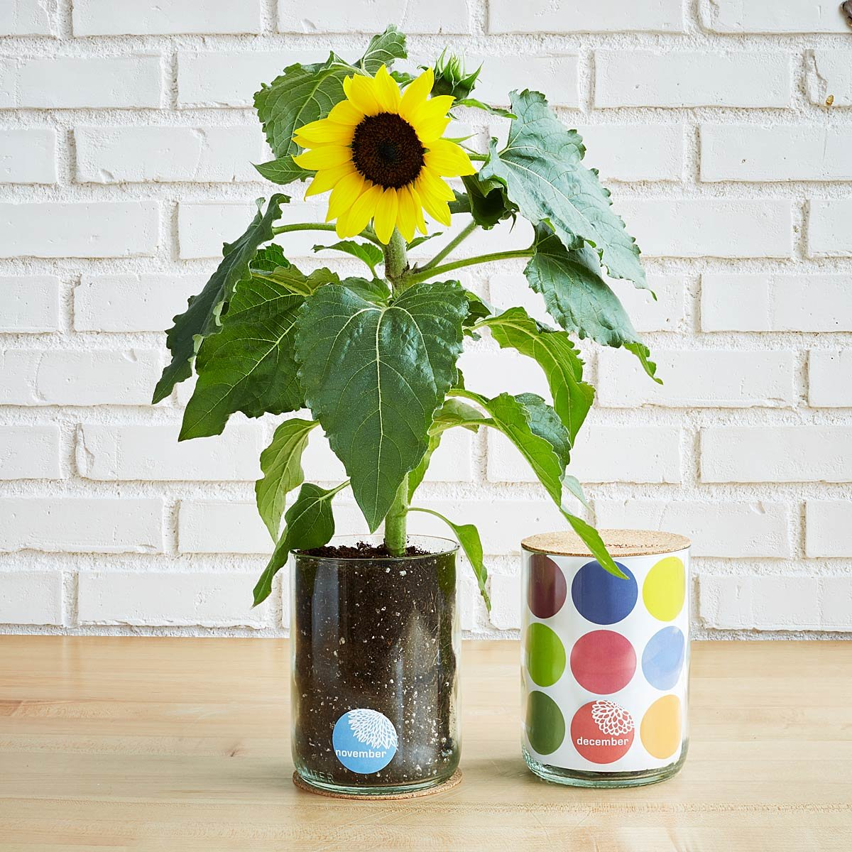 Birth Month Flower Grow Kit | UncommonGoods