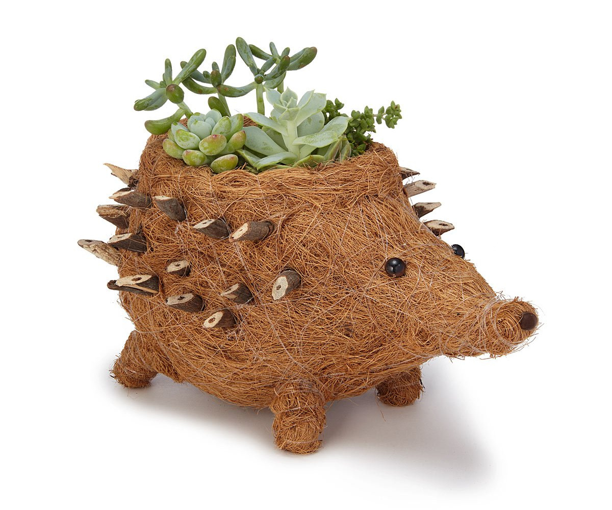 Coconut Fiber Hedgehog Planter | UncommonGoods