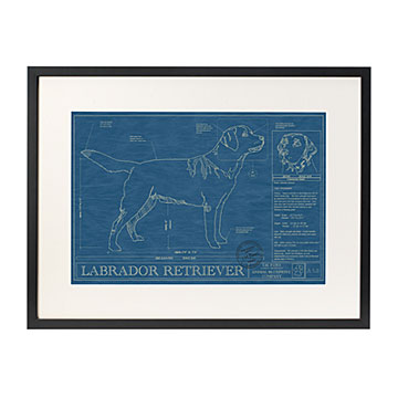 Dog Blueprints