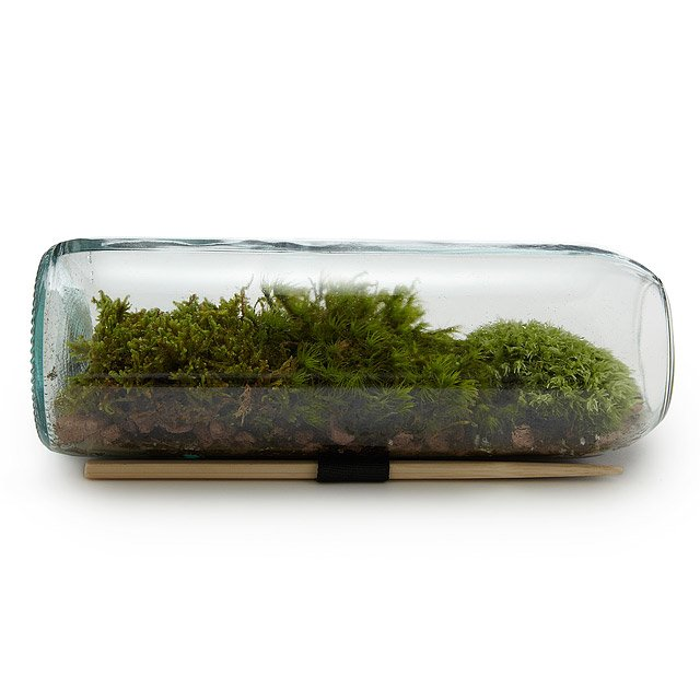 Moss Terrarium Bottle Glass Terrarium Gift Uncommongoods