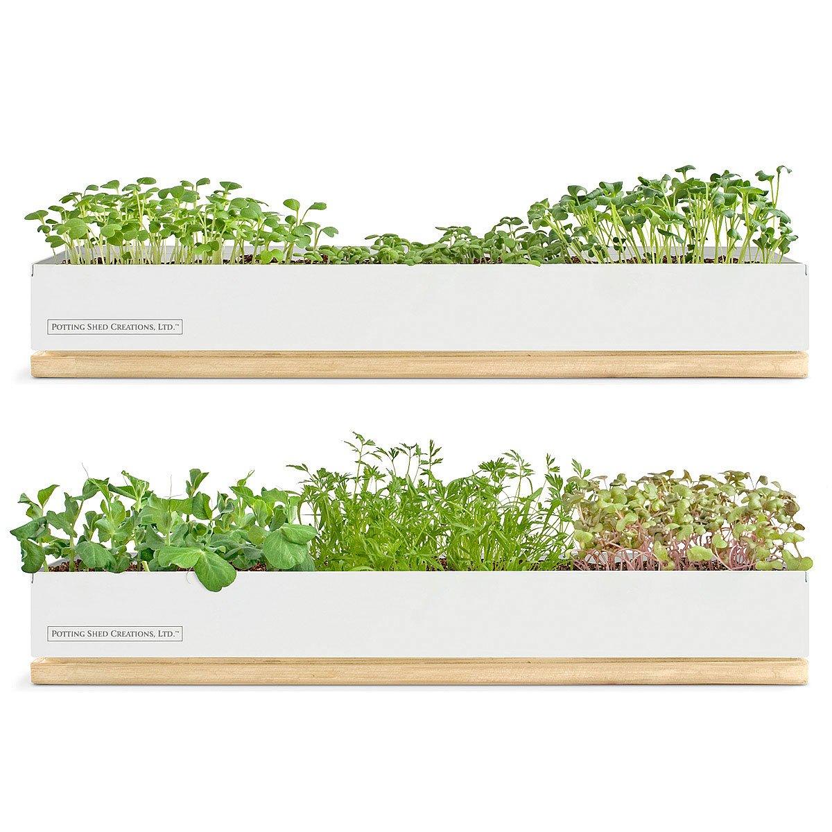MicroGreen Kits Growing Kit Sprouting Kit UncommonGoods