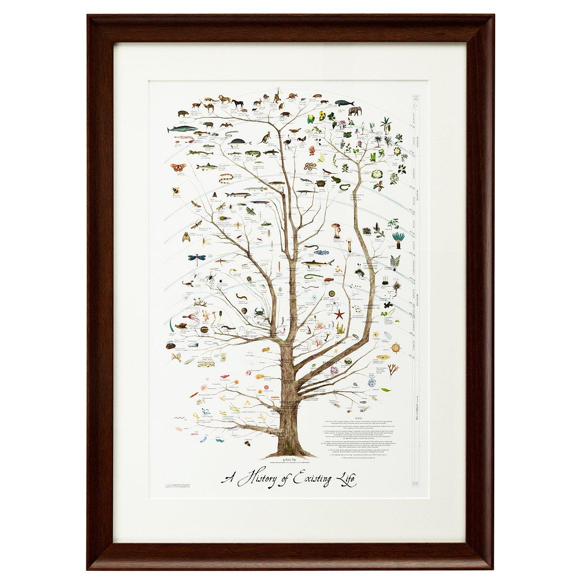 A History of Existing Life | Nature Art, Evolution Tree Artwork ...