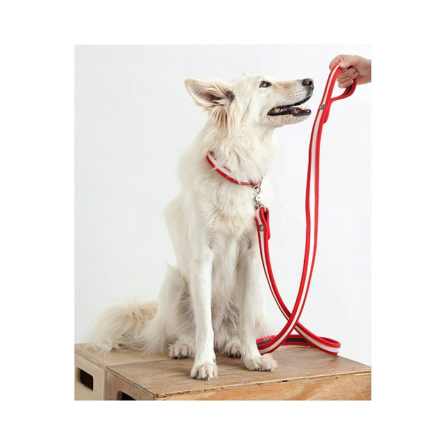 Fire Hose Dog Collar and Leash 2