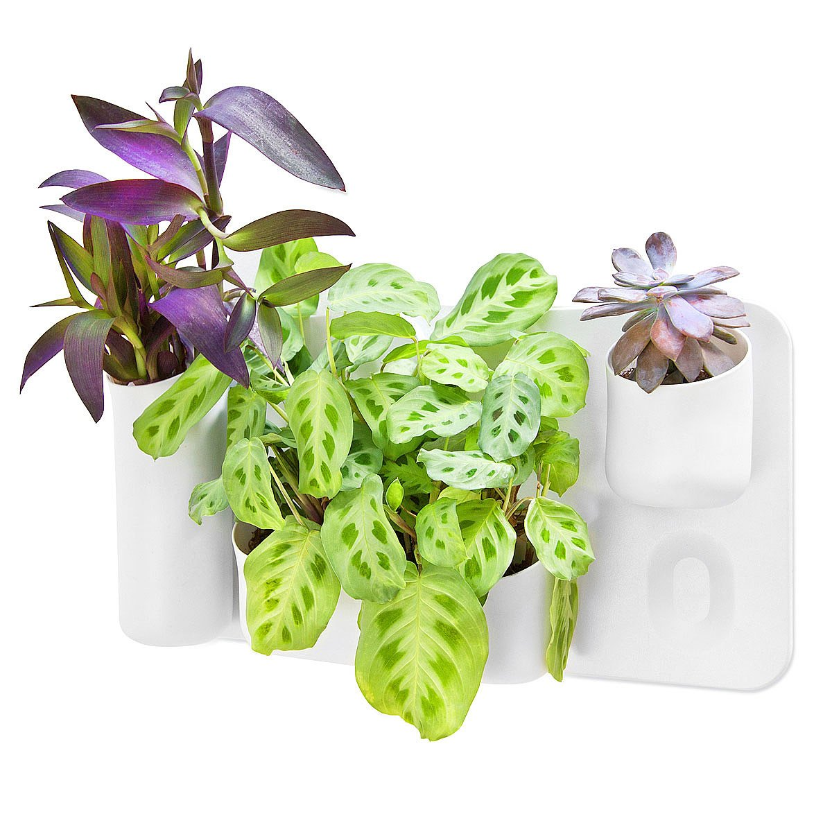 vertical wall planter wall garden planter uncommongoods