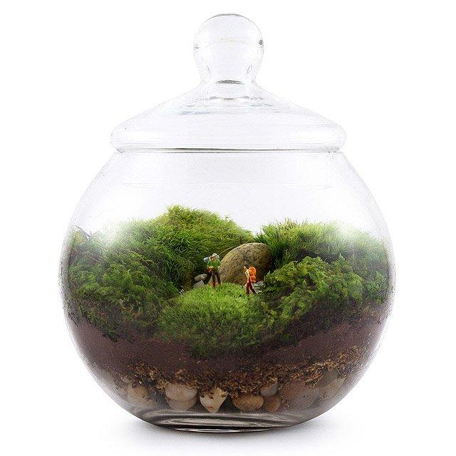 Uncharted Territory Terrarium Moss Terrarium Glass Uncommongoods