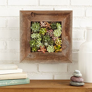 Nice Succulent Living Wall Planter Kit