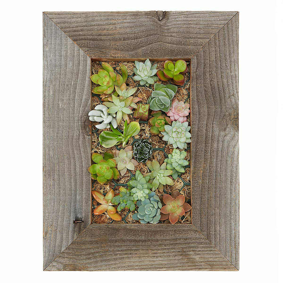 Succulent Living Wall Planter Kit 2 Thumbnail