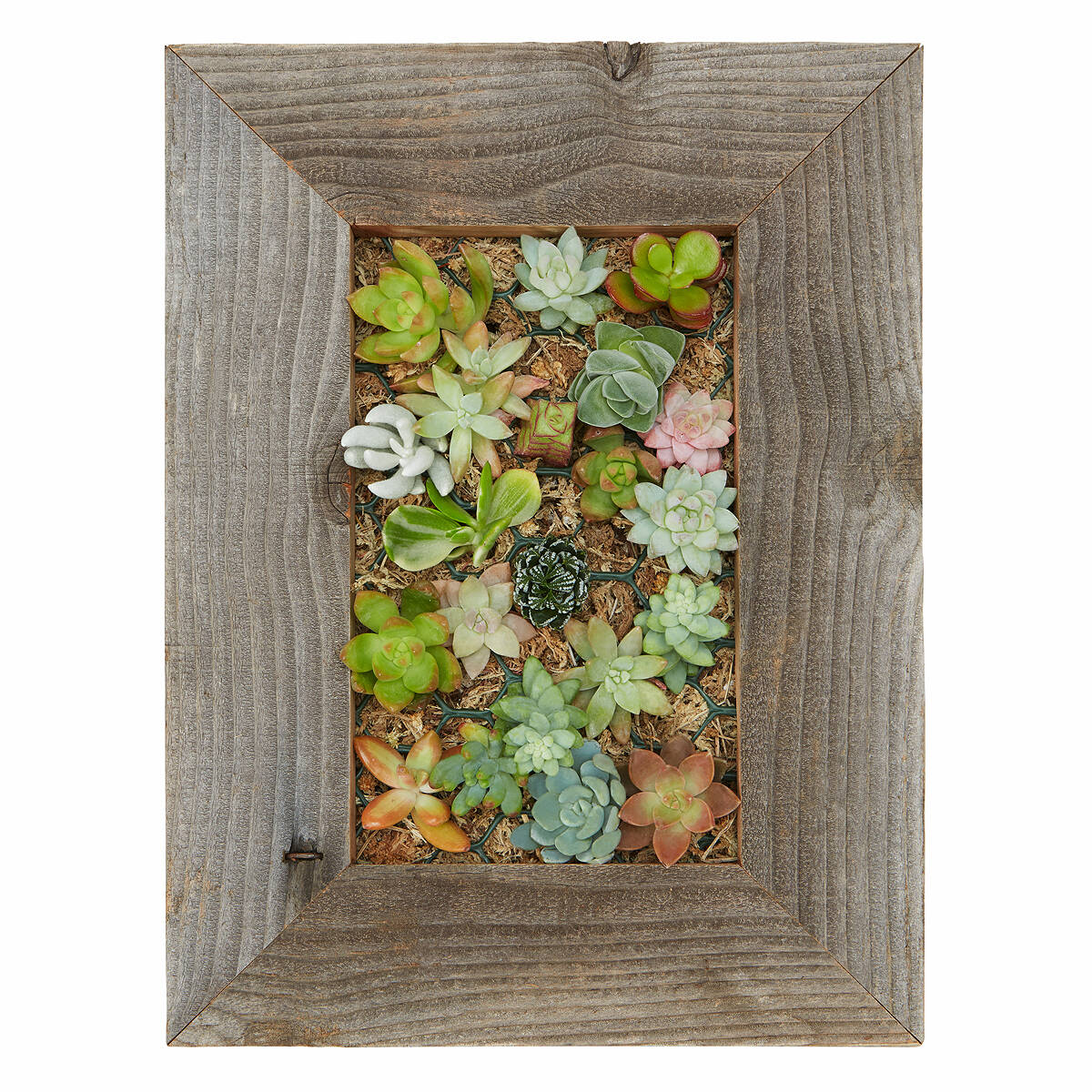 Succulent Living Wall Planter Kit 3 Thumbnail