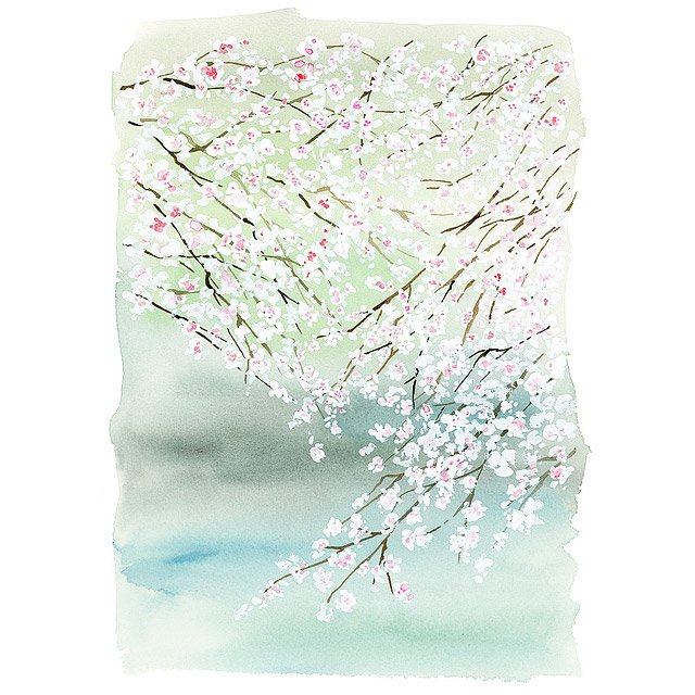 Cherry Blossoms on the Lake - Yao Cheng 2