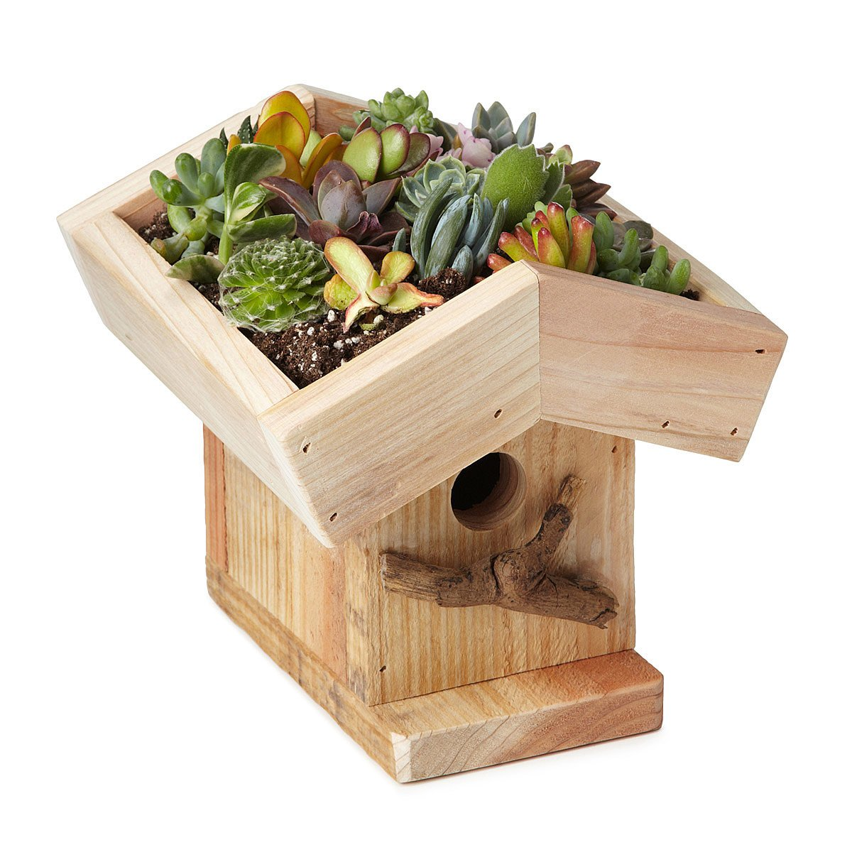 Birdhouse Living Roof Birdhouse Kit Living Roof Bird House Uncommongoods