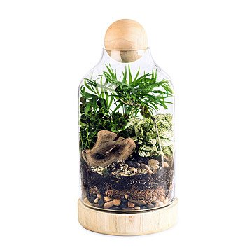 The Lucky Gardener DIY Terrarium Kit