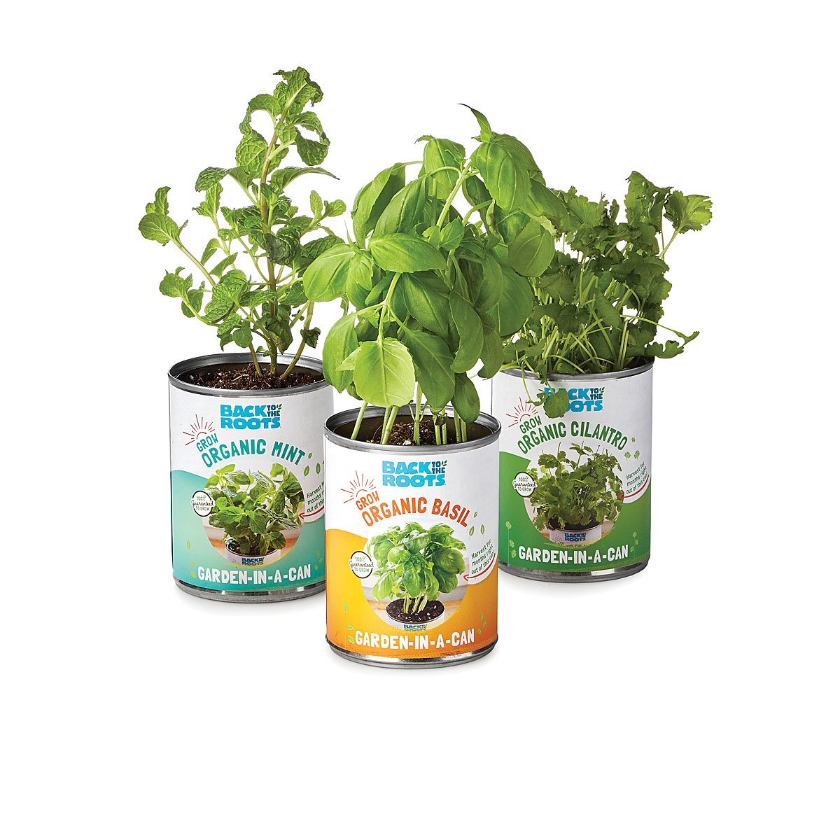 Herb Kitchen Garden Kit Garden In A Can Set Of 4 Herb Growing Kit Uncommongoods