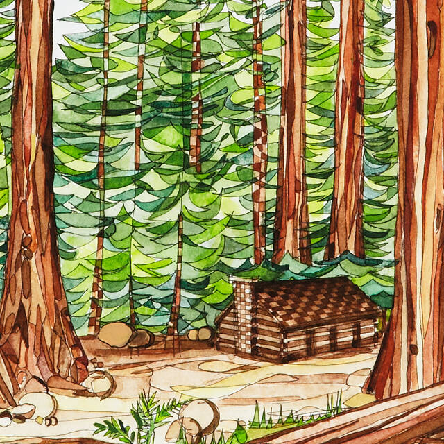 Redwoods of the West Coast