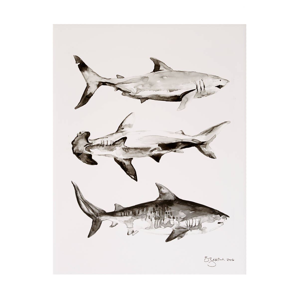 Uncategorized Shark Images To Print shark print pictures of sharks week uncommongoods 2 thumbnail