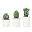 Cacti Canisters - Set of 3 2 thumbnail