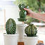Cacti Canisters - Set of 3 3 thumbnail
