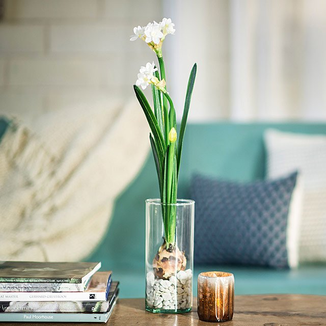 Paperwhite Winter Bulb Kit Flower Gifts Uncommongoods
