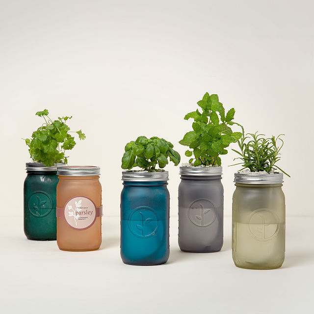 Charmant Mason Jar Indoor Herb Garden
