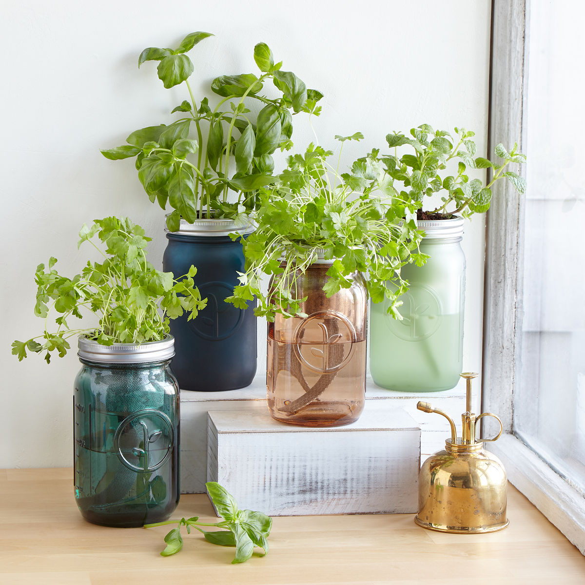 Herb Kits For Indoors
