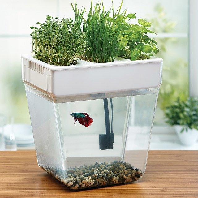 Water Garden Deluxe