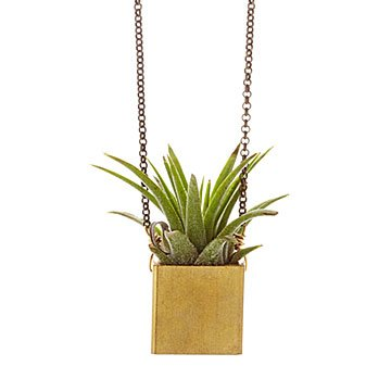 Live Succulent Plant Necklace