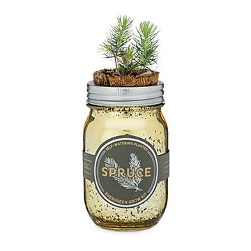 Holiday Spruce Grow Kit